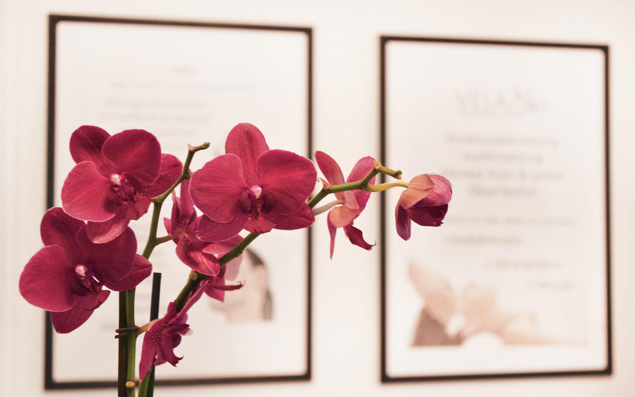 blomma-kunddisk